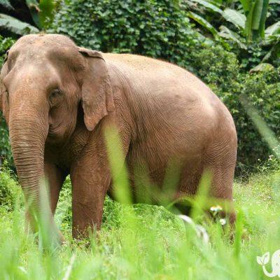 Photograph Elephant Highlands
