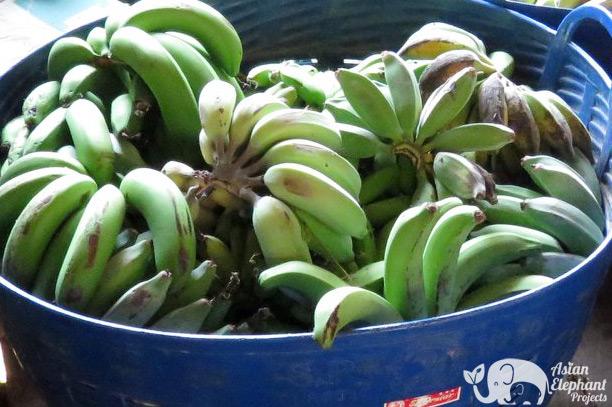 Elephant Food Snack Package - Basket of Bananas