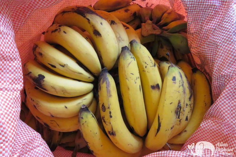 Elephant_Snack_Package_Bananas5