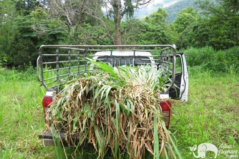 Elephant Food Support Package Grass