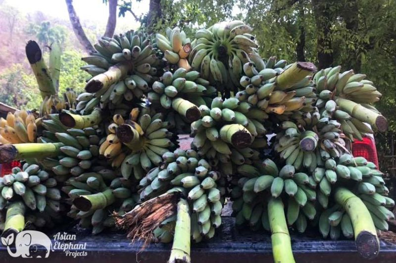 Elephant Food Delicacy Package - Pickup Truck of Bananas