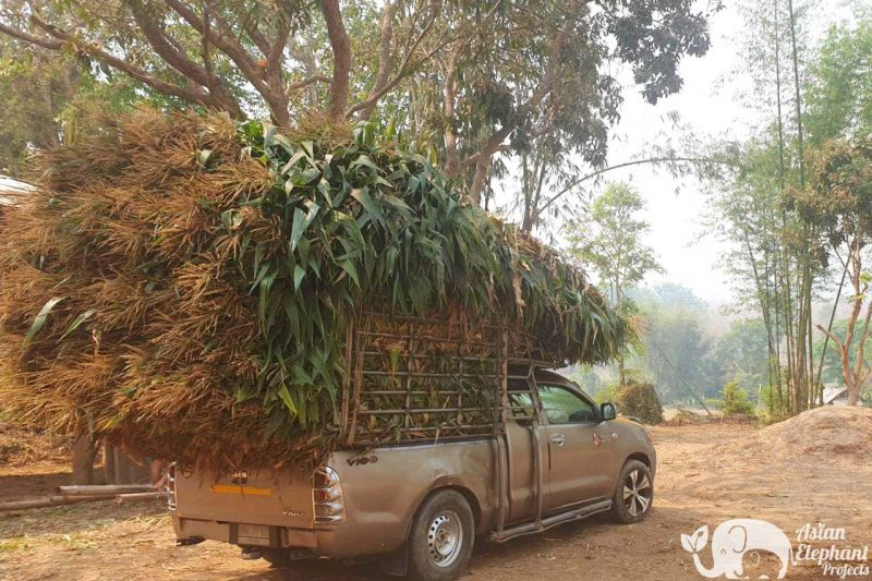 Elephant Food Rescue Package - Pickup Truck of Corn Stalks