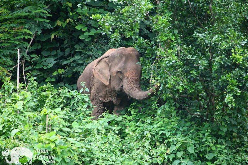 Elephant Wellnes Asian Elephant Projects