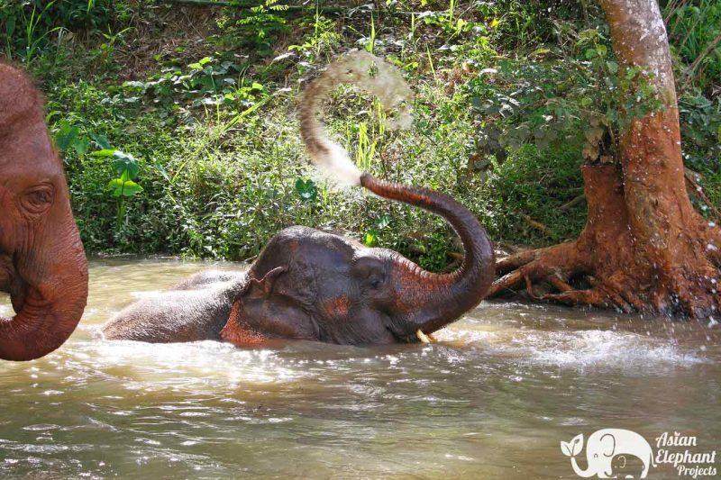Hope for Elephants Asian Elephant Projects