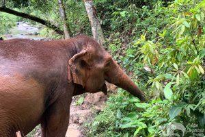 Karen_Elephant_Experience