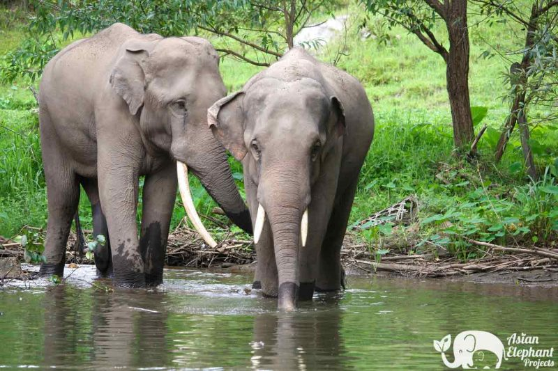Karen Elephant Home Asian Elephant Projects