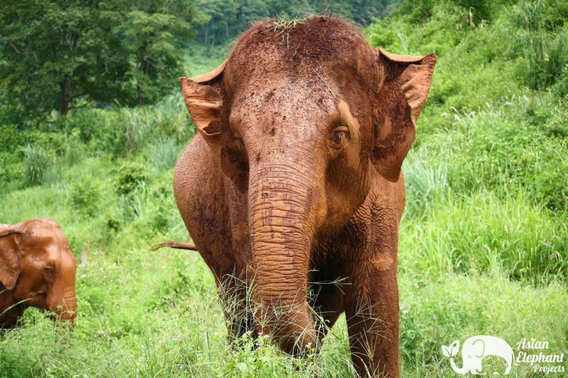 Save Thai Elephant Park Asian Elephant Projects