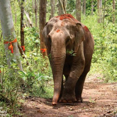 Sunshine for Elephants Asian Elephant Projects