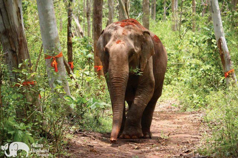 Sunshine for Elephants Asian Elephant Projects