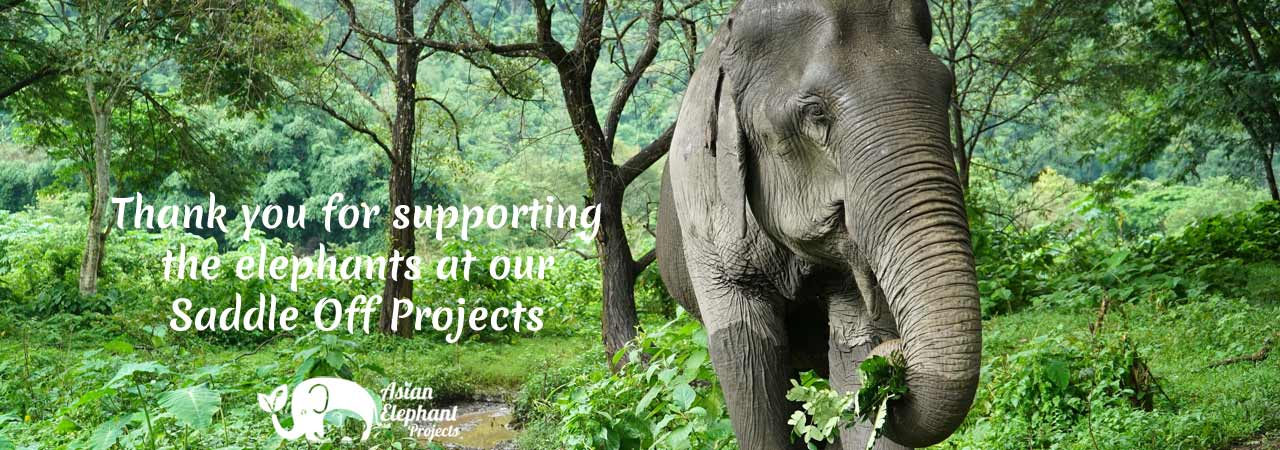 Asian_Elephant_Projects_Thanks_Shop