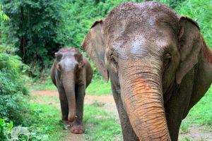 Majestic Elephant Project ethical elephant tour