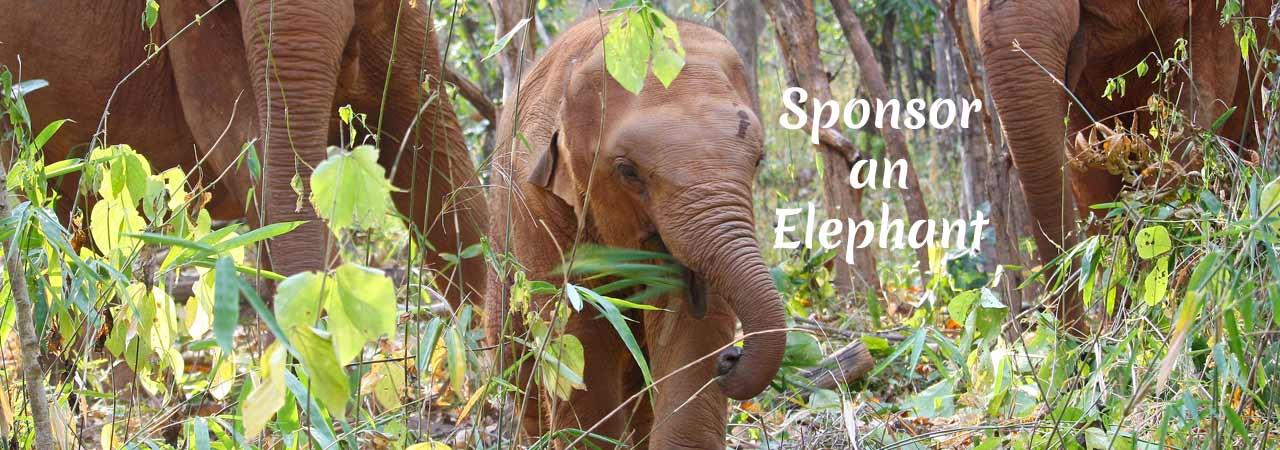 Sponsor_an_Elephant_Asian-Elephant-Projects