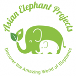 Asian Elephant Projects Elephants chiang mai