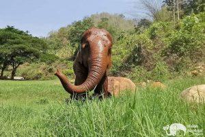 Pamper A Pachyderm Elephant Sanctuary