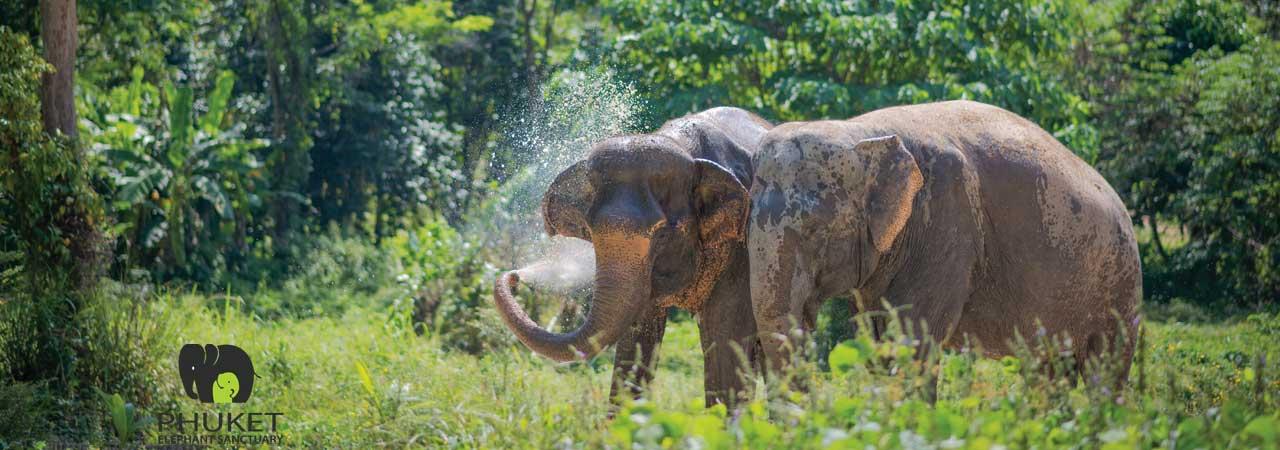 Pkuket_Elephant_Sanctuary_Phuket