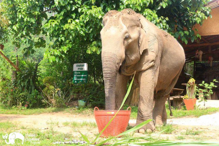 Elephant_Pride_17