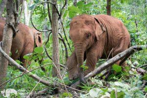 Karen Mountain Hideaway baby elephant