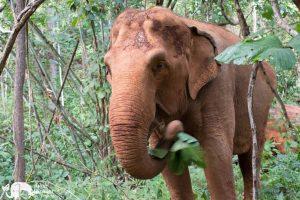 Karen Mountain Hideaway elephant