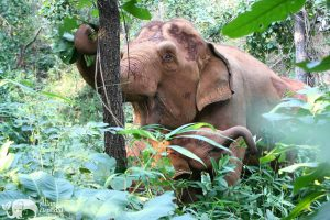 Karen Mountain Hideaway ethical elephant sanctuary