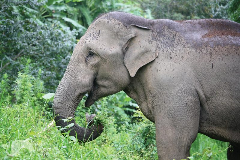 Kham Meun Karen Elephant Home