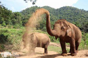 Pamper A Pachyderm Elephant Sanctuary Chiang Mai