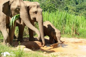 Elephant family at Karen Elephant Serenity