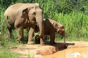 Baby elephant & mother at elephant sanctuary