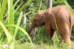 Baby elephant at Karen Elephant Serenity