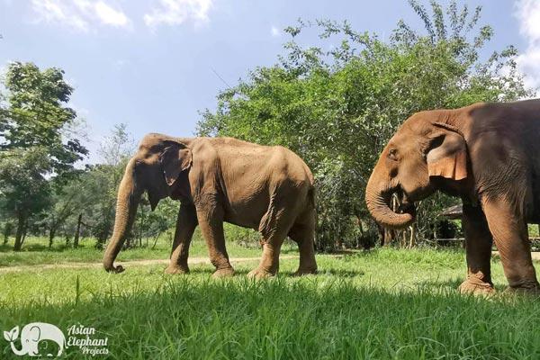 Pamper A Pachyderm Elephants