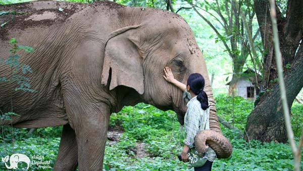 Muoy with Sa Ard Pamper a Pachyderm