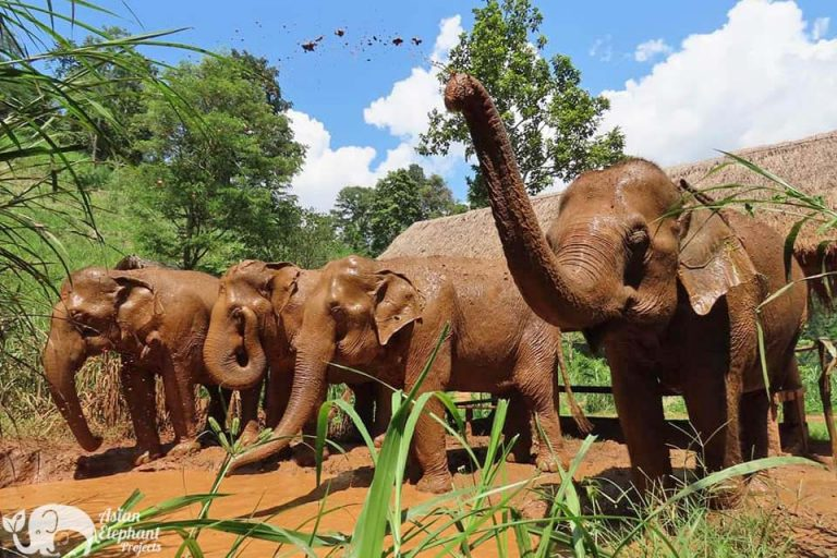 Elephant Delight ethical elephant project