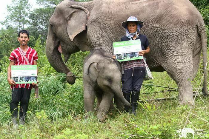 Baby_Elephant_Bella_Thankyou_2