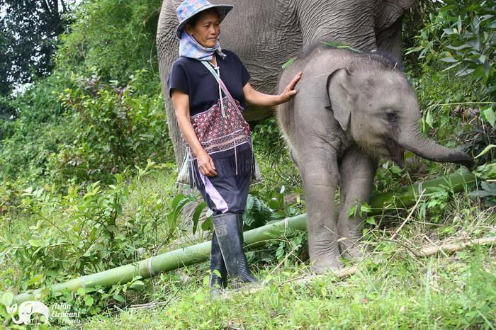 Baby_Elephant_Bella_Thankyou_3