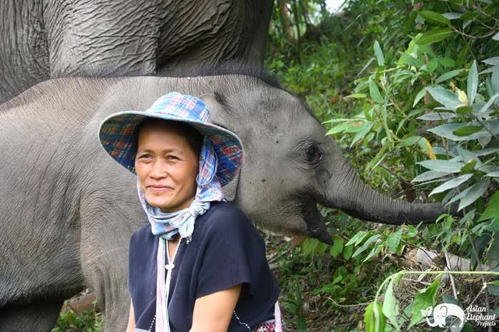 Baby_Elephant_Bella_Thankyou_4