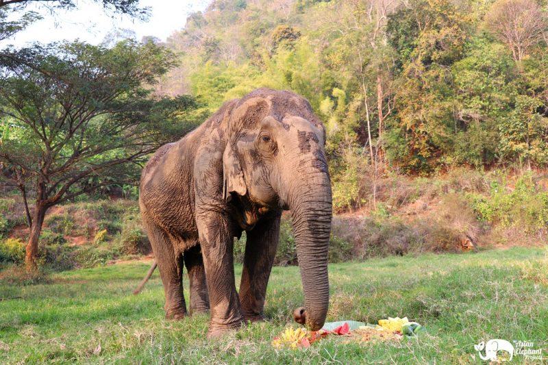 Elephant Eating Cake