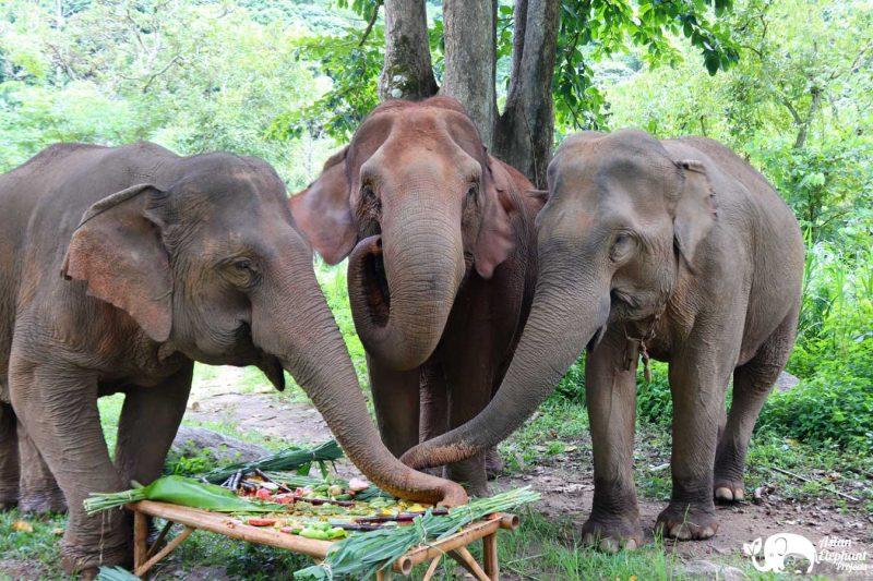 Elephant Cake Gift Large