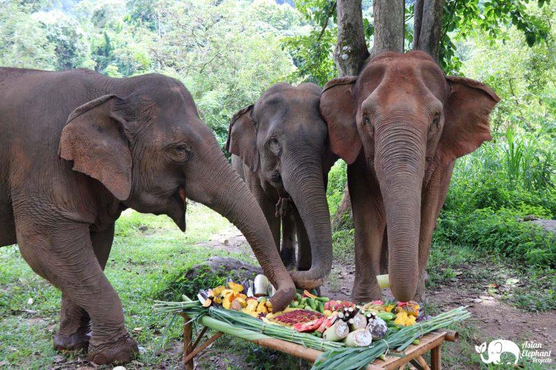 Elephants eating fruit cake