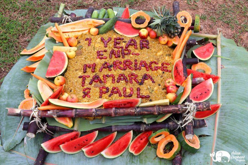 Elephant Cake Gift Medium