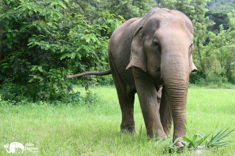 Elephant Fruit Cake Pamper A Pachyderm