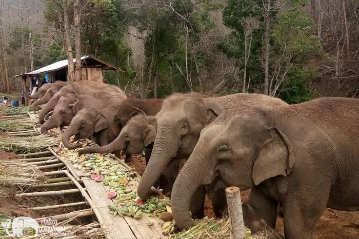 Elephant_Herd_Baan_Huay_Bong_1