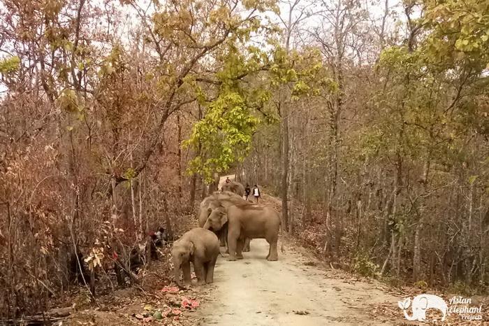 Elephant_Herd_Baan_Huay_Bong_10