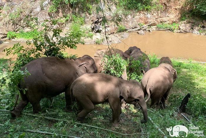 Elephant_Herd_Baan_Huay_Bong_12