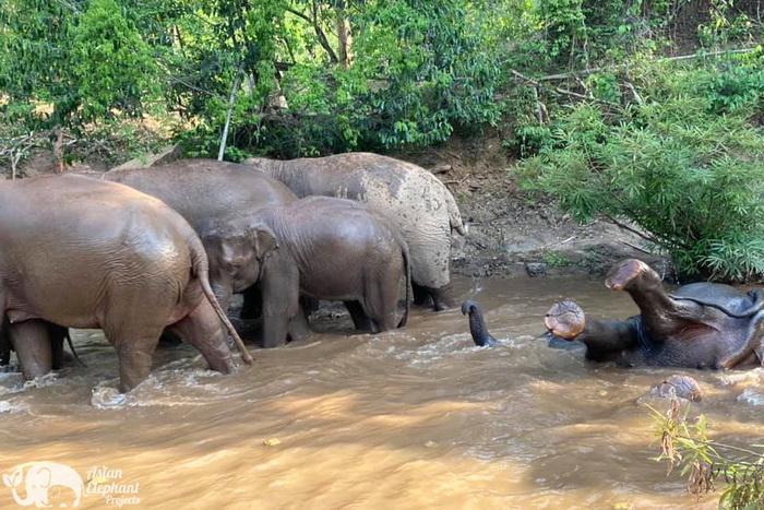 Elephant_Herd_Baan_Huay_Bong_3