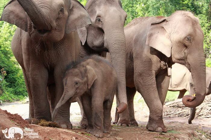 Elephant_Herd_Baan_Huay_Bong_7