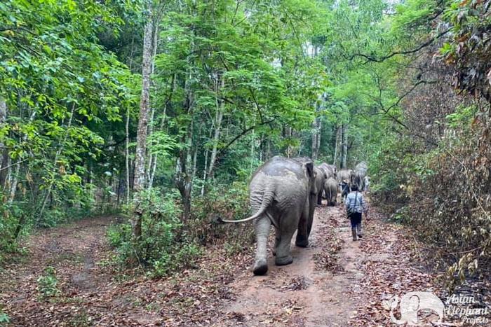 Elephant_Herd_Baan_Huay_Bong_9
