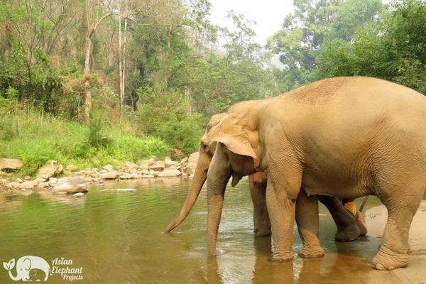 Elephants_Majestic_Support_20