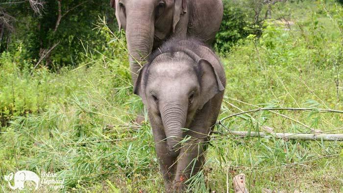 Karen_Elephant_Retirement_S23
