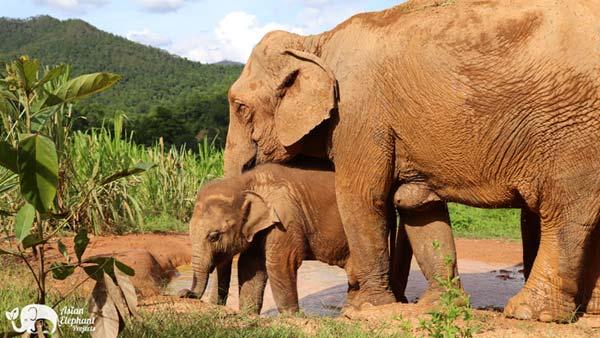 Sponsor Heng Heng Karen Elephant Serenity