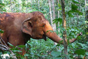 Karen Mountain Hideaway elephants