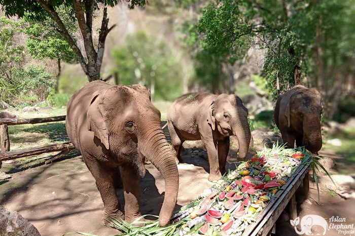 Sunshine_for_Elephants_Food5